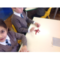 Children were using play dough to make Amphibians.