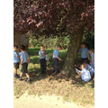 Exploring habitats around school