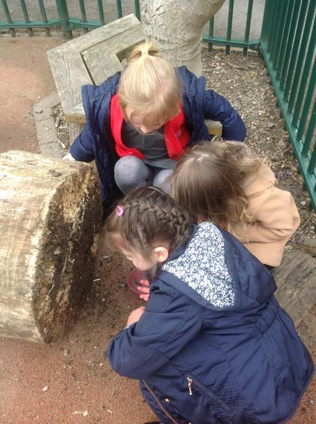 We love looking for minibeasts.