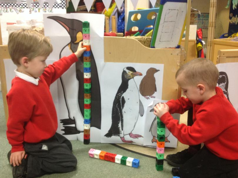Which penguin is the tallest?