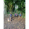 Fun in our playzone- The woods