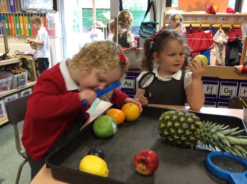 Exploring fruit
