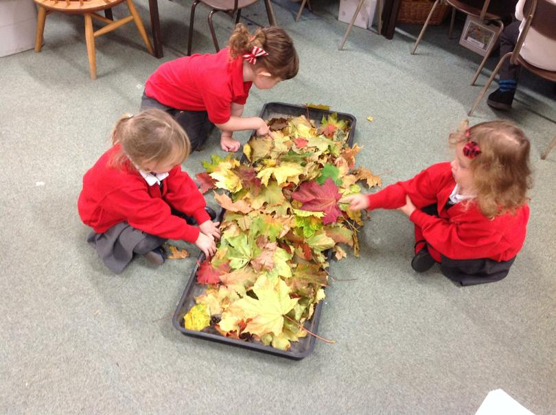 Exploring leaves.