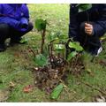Making miniature rainforests
