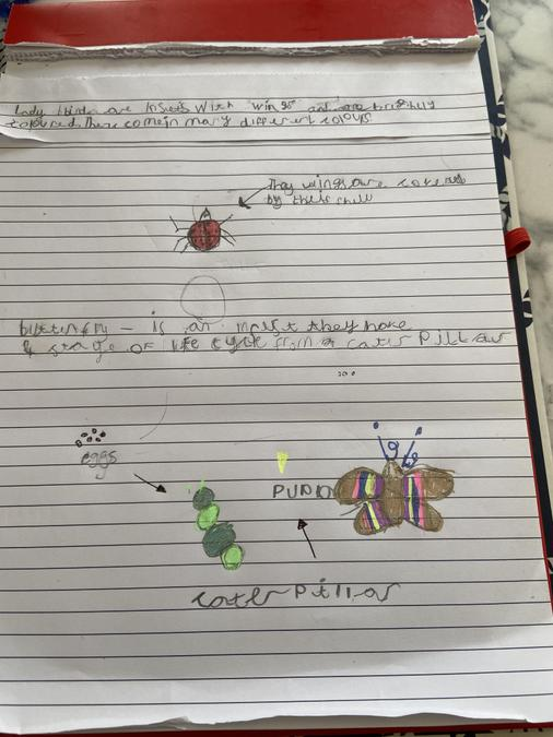 Read Louisa's fantastic mini-beast writing!
