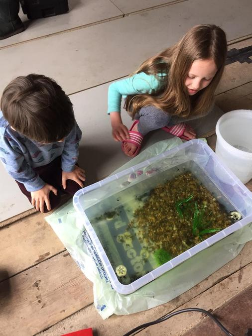 Jack and his sister are raising tadpoles!