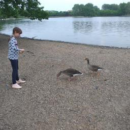 Feeding the ducks.