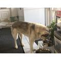Ava's dog
