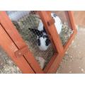 Mia's rabbit