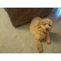 Kai's dog