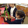 Measuring to see how much our plants have grown.
