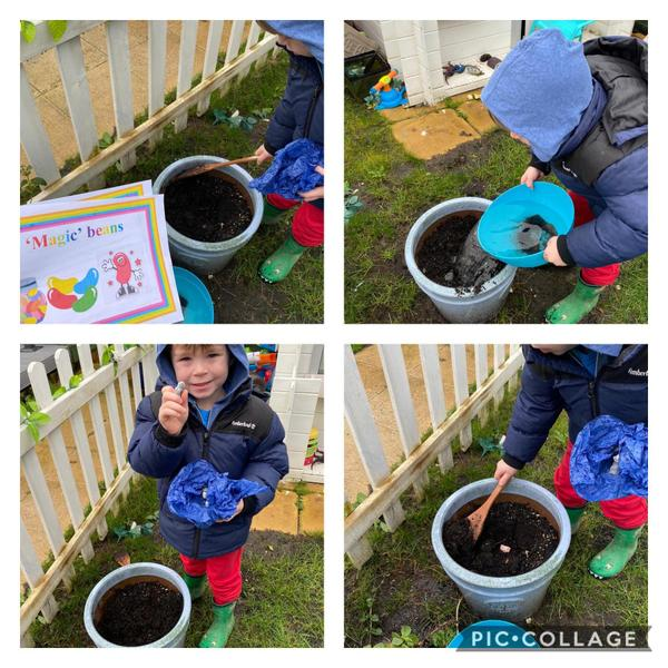 Harry planting his 'magic' beans