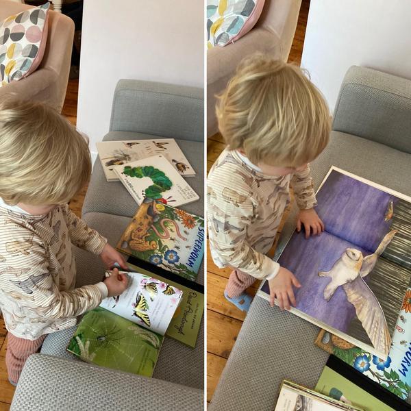 Fox looking at minibeast books for choosing