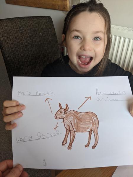 Leias fact sheet about an Ox