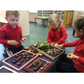 Making pictures with our forest treasures