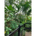 Reception - Tropical World