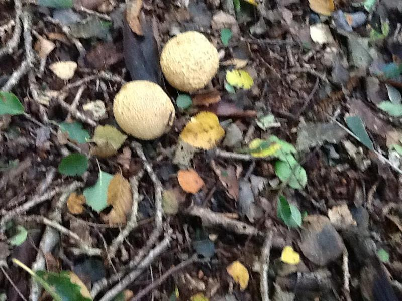 More funny mushrooms.
