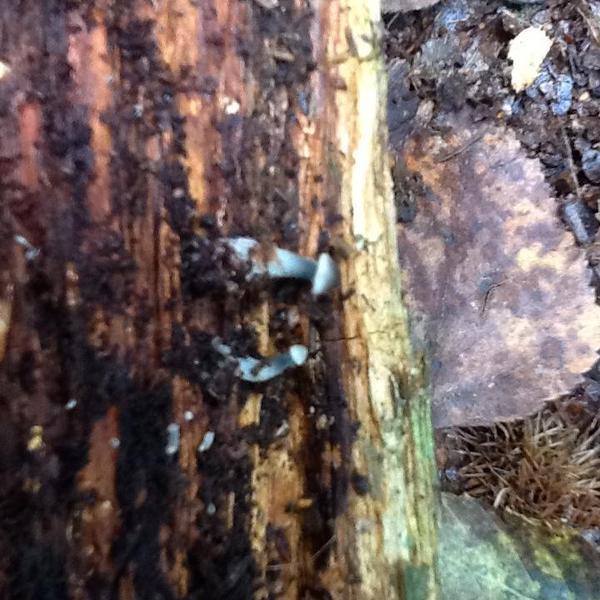 Teeny tiny mushrooms!