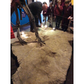 Dinosaur footprints.