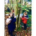 Bark Rubbings in our Woodland