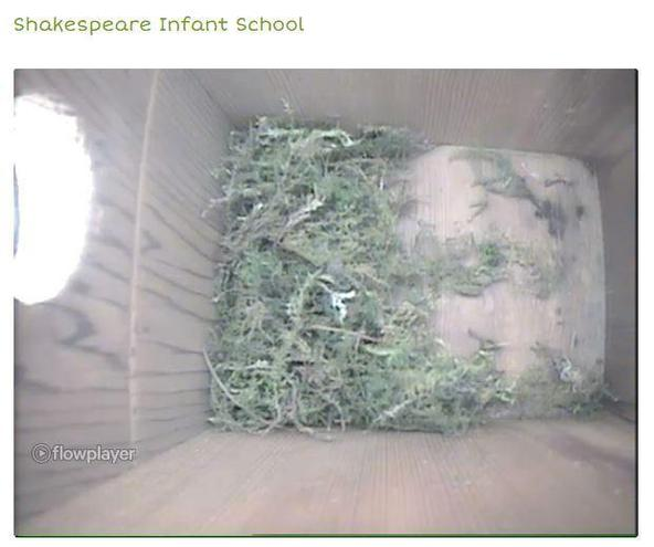 Our Blue Tit spent last night roosting in the box and is back to work building the nest.