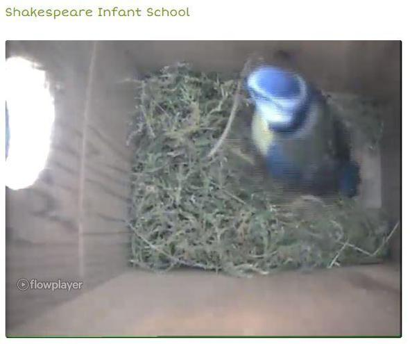 You can see our Blue Tit is really working hard on it's nest today!