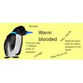Melissa's penguin facts