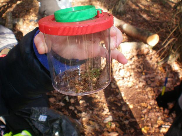 We carry our regular mini beast hunts to investigate the type of animals that live within the different habitats of our school grounds.