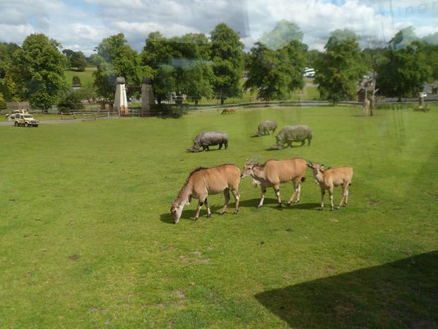Y6 went to the Safari park to see different habitats and adaptation at work!