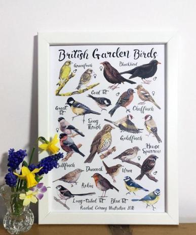 a photo of a poster showing UK garden birds