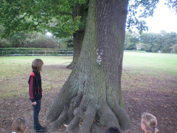 We measured the age of the trees in our grounds and we were amazed at how old some of them are! We imagined what the trees may have seen in their lifetime and the stories that they could tell if only they could speak!