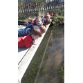 The children spotted snails in the water.