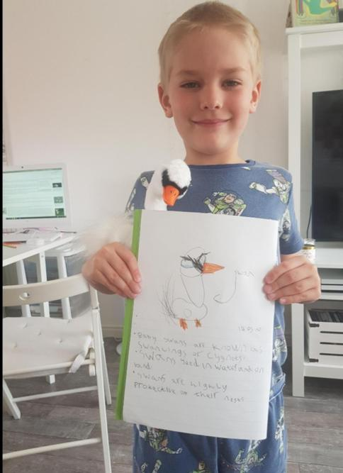 William got a swan so wrote 3 facts about them!
