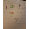 Evie's wild flowers