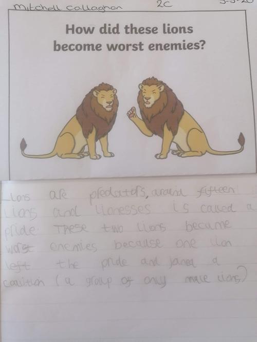 Mitchell's wonderful writing about lions!