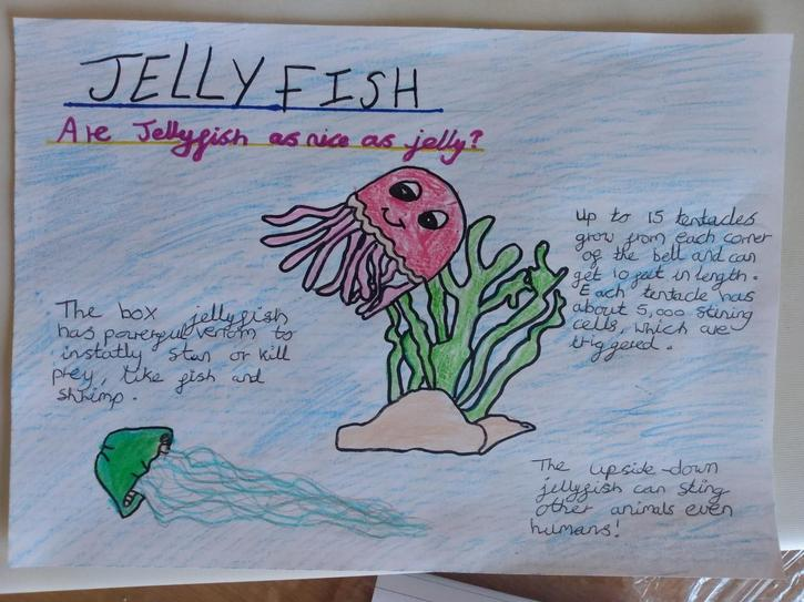 Sophie's jellyfish facts! 4CW