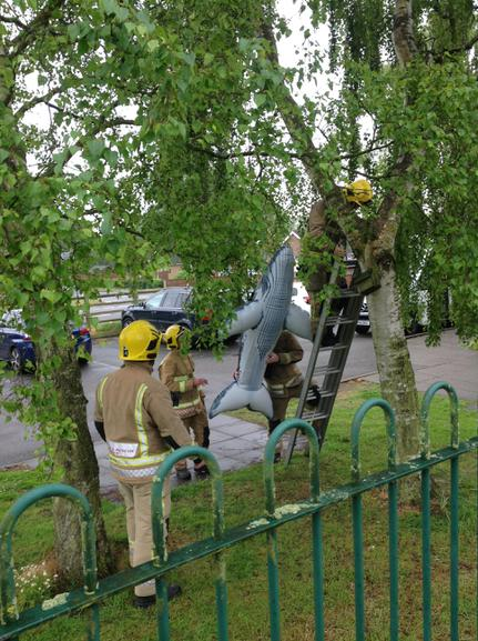 The fire service rescuing a whale from a tree