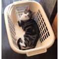 If he fit, he sits!