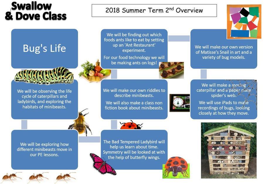 EYFS Bug's Life