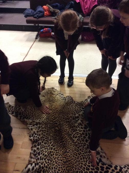 Leopard skin!