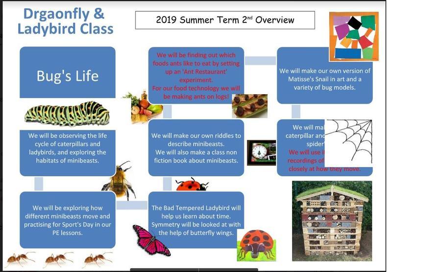 EYFS Summer Overview Second Half Term