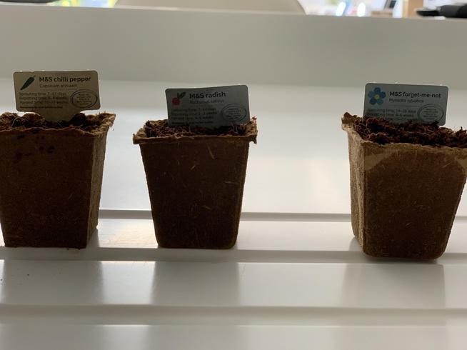 Finally, I had three pots ready to grow!