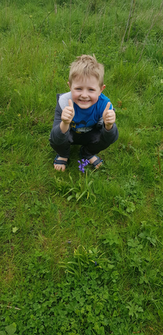 Archie hunting for bluebells