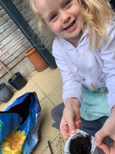 Lillie planting sunflower seeds