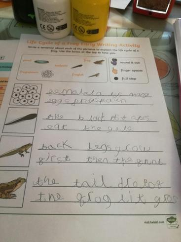 Dexter's writing about the frog life cycle