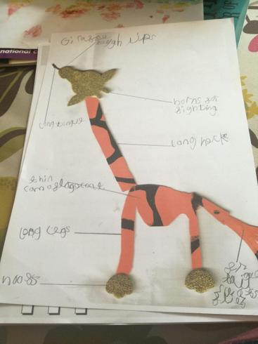 Dexter's giraffe with labelled adaptations