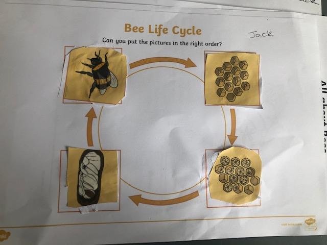 Jack's bee life cycle