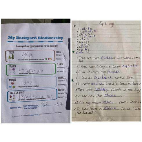 Evalyn's spellings and biodiversity check