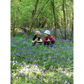 Searching through the bluebells