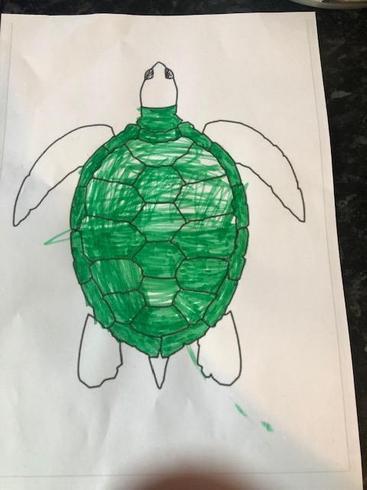 Jack's sea turtle